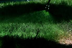 Green Paint by California Drought Residents Paint Their Lawns Green