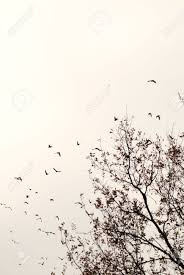 sharp silhoutte of a tree in autumn with birds flying away to