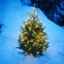 christmas tree in the snow plano frisco allen mckinney tx