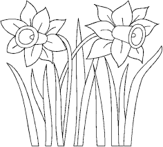 daffodil color images reverse search