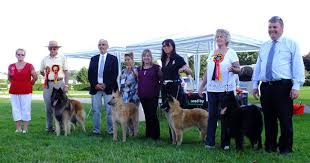 belgian sheepdog association belgian shepherd dog association of great britain home facebook
