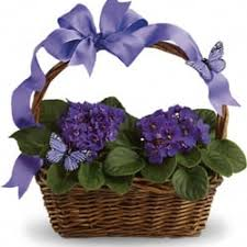 Flowers By Violet - flowers by gina 13 photos florists 5746 main st elkridge
