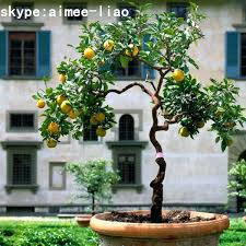 q010501 artificial fruit trees for sale small bonsai tree artificial