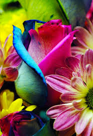 Beautiful Flower Pictures 1064 Best Flowers And Butterflies Images On Pinterest Flowers