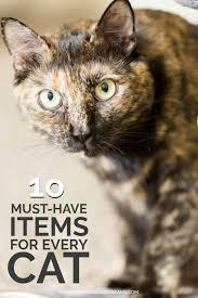 10 Must Haves For Every by 10 Must Haves For Every Cat Spaceships And Laser Beams