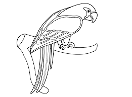 drawing kids birds parrot coloring pages kids