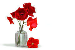 Vase With Red Poppies Poppies Vase Stock Photos Download 462 Images