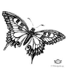 beautiful black and white butterfly butterfly