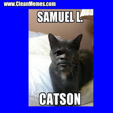 catson clean memes the best the most online