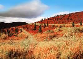 Teh Yakon information about the canadian yukon territory canadavisa