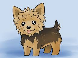 how to draw a yorkie with pictures wikihow