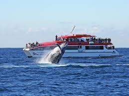 sydney harbor cruises sydney harbour cruises sail sydney harbour