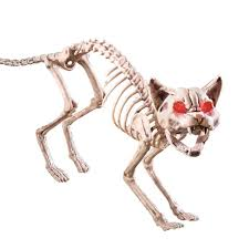 amazon com scary sound activated skeleton cat halloween