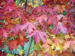 halloween background leaves wallpaper fall leaves wallpapersafari