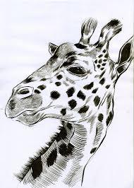 mc drawn blender lane market sketch u2013 giraffe brush and ink