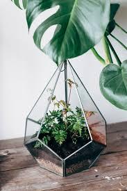 diy mini terrarium garden the daily gypsy
