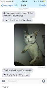 White Cat Meme - 25 best memes about white cat with hands white cat with hands