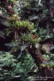 Dominant Plants Of The Tropical Rainforest - community and ecosystem dynamics