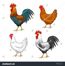 chickens set vector illustration color brown stock vector