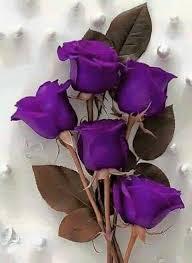 purple roses best 25 purple roses ideas on purple flowers