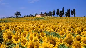 images of tuscan villa hd sc