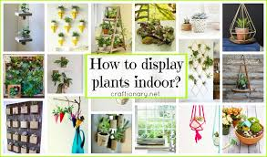 plants at home craftionary