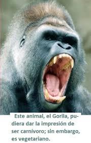 imagenes de animales carnivoros para imprimir alimentación animal monografias com