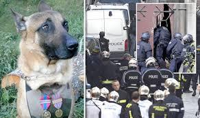 belgian shepherd killed paris terror siege police dog diesel killed by woman