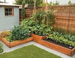 Backyard Vegetable Garden Ideas Shining Backyard Vegetable Garden Ideas Fabulous Wonderful Small