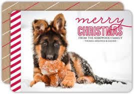 dog christmas dog christmas cards dog photo christmas cards