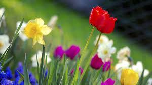 Cute Flower Wallpapers - top flower garden wallpaper images hd photos gallery download