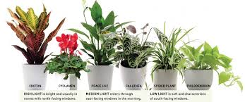 bathroom plants reader u0027s digest