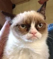 Meme Generator Grumpy Cat - grumpy cat reverse blank meme template imgflip