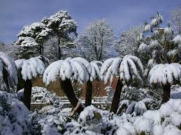 royal botanic garden edinburgh winter highlights