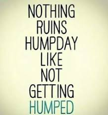Dirty Hump Day Memes - sexy hump day memes hump day meme pinterest meme