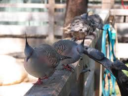 city of prospect birds