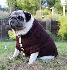 pug sweater ravelry pug sweater pattern by angelcatkins elizabeth