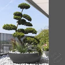 modern interior design large shallow round bowl planter pot