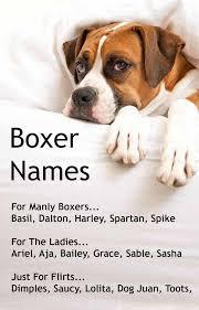 boxer dog sayings boxer dog names popular male u0026 female boxer names dog animal