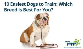 belgian shepherd easy to train 10 easiest dogs to train which breed is best for you