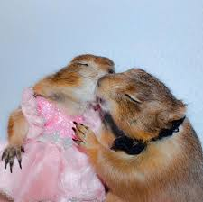meet bing and swarley the two most important prairie dogs on the