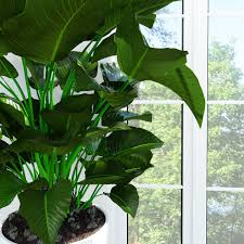 philodendron congo 3d cgtrader