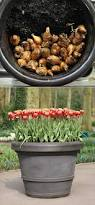 23 best plant tulips in pots images on pinterest tulips