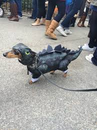 Halloween Costumes Dachshunds Halloween Costume Parade U2013 Dogs Digging Ri