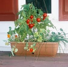 Vegetable Container Garden - rich soil container gardening for vegetables 855 hostelgarden net