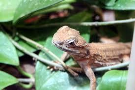 free photo lizard terrarium reptile free image on pixabay 17601