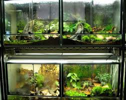 619 best reptile enclosures images on pinterest reptile