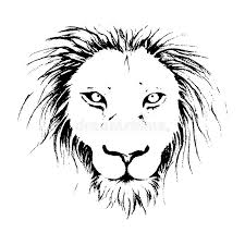 lion face drawing illustration in black and white line art stock