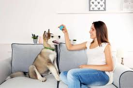 woman dog training couch the persuaded pooch st louis dog