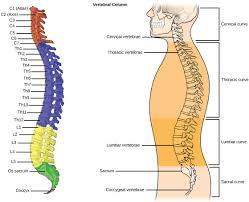 Human Anatomy And Physiology Terminology Human Anatomy And Physiology Terminology Anatomy Physiology A